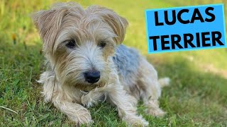 Lucas Terrier  TOP 10 Interesting Facts
