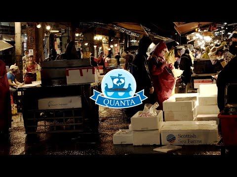 Fresh Wild Seafood|Quanta|Taiwan Trade|Cut-down Version