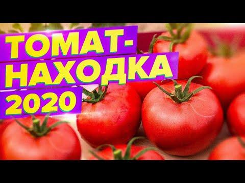 СУПЕРУРОЖАЙНЫЙ ТОМАТ 2020. ЛУЧШЕ ЧЕМ ГИБРИД!