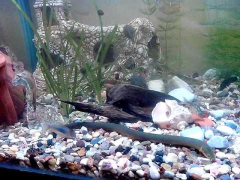 аквариум змеи едят)