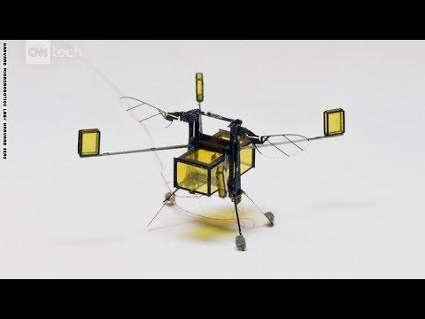 نحلة آلية يمكنها التحليق والسباحة والقفز من على الماء  - نشر قبل 12 ساعة
