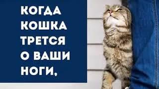 Коты бывают разные....