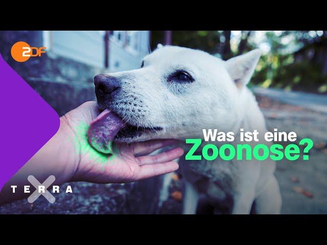 Wie Tiere uns krank machen können   Terra X plus