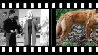 Дикая собака Динго или повесть о первой любви