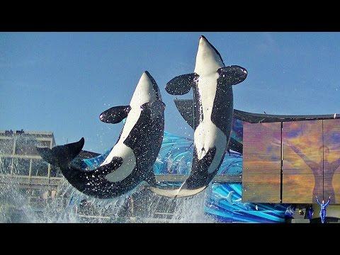 One Ocean (Full Show/Full HD) April 19 2015 5pm - SeaWorld San Diego