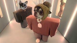 Собака читает рэп! Первый ХИТ чихуахуа Фондю. (Kanye West & Lil Pump parody)