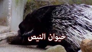الحيوانات  - حيوان النيص