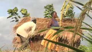 Rice Farming in Afife, Ghana