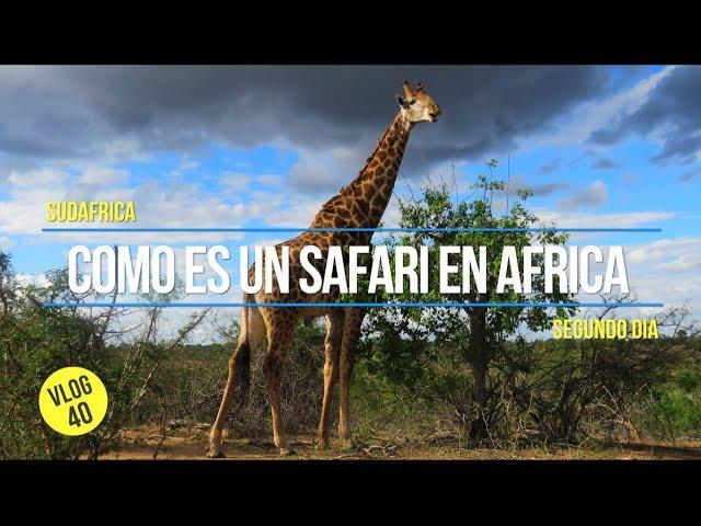 Como es un Safari en SUDÁFRICA 🇿🇦 🦁
