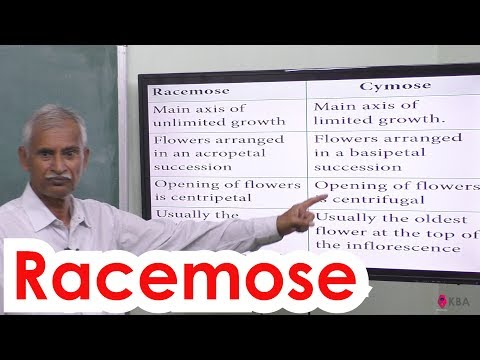 3.Botany | Reproductive Morphology | Racemose