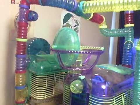 tube hamster The Qute Hamster and Gerbil Cage could be just what you're after.
