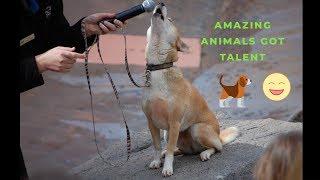 Animals Got Talent! Amazing!