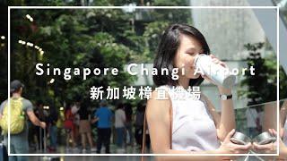 SWANZ陶瓷保溫杯|新加坡樟宜機場
