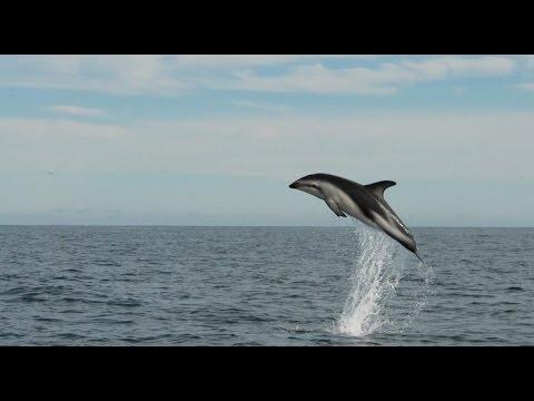 Yunus Balığı Görüldü Sakarya Karasu İlçesinde Yunus Show