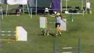 Akc Agility -- Countywide Dog Training Club