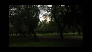 Hawaiian Gremlins - La Unión (official video)