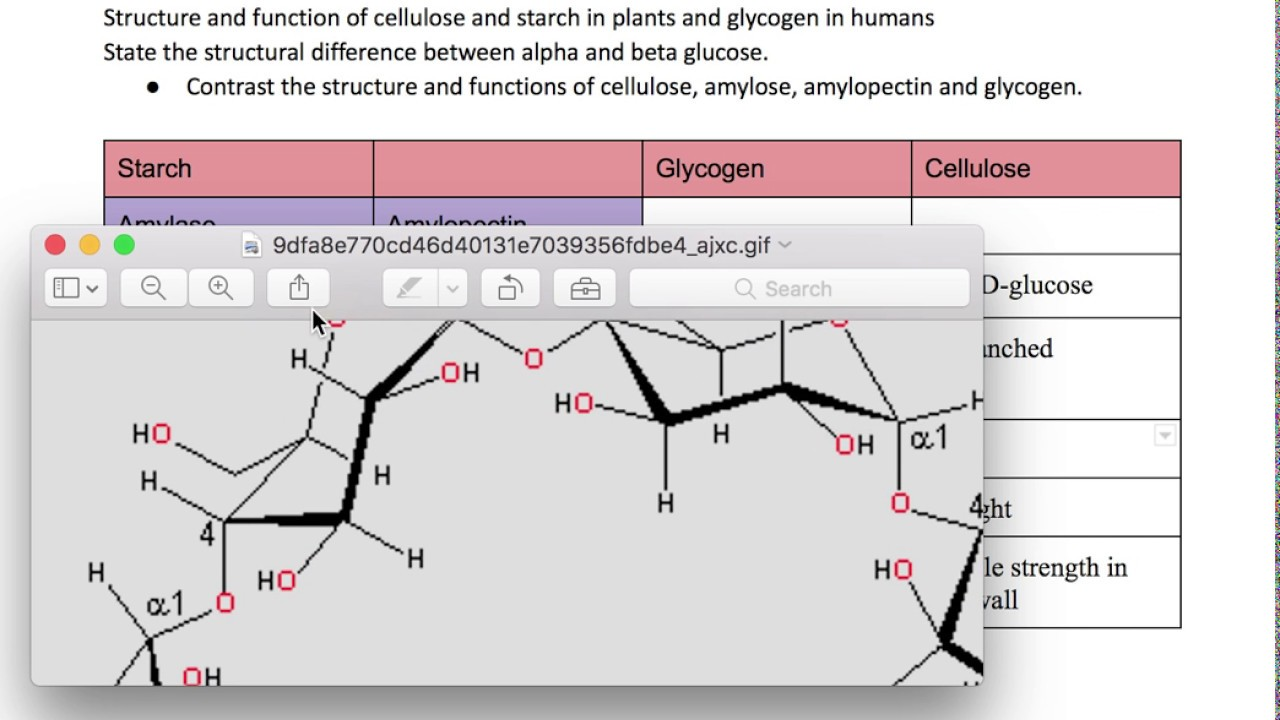 starch glycogen and cellulose The chief difference between starch and glycogen is that glycogen consists of long glucose polymer chains with a significant number of branch points, usually at every 8 to 12 glucose residue.