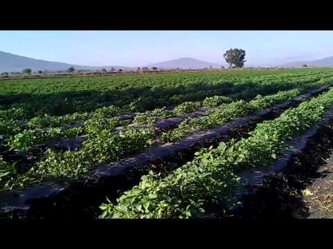 Farming on mexico