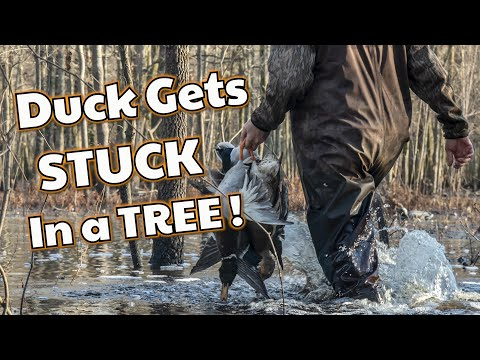 Arkansas Duck Hunting Guide | Flooded Timber