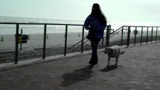 Deaf Dog Training Einstein E Collar Remote'' Communicator'' Delbert