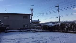 日本スピッツのシャチが庭に積もった雪の上で楽しそうにボールを追いか...