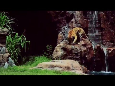"""Harimau from Predator to Prey"" Show"