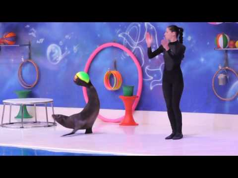 Dubai Dolphinarium Full Show (part 1) The Seal HD 1080p