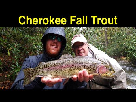 Cherokee Fall Trout Fishing