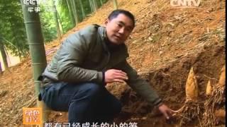 20140518 绿色时空 小竹子华丽转身赚大钱(二)