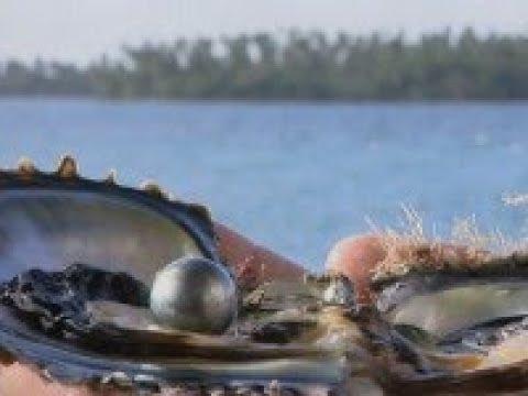 Pearls Of Tahiti Documentary Of Patrick Voillot