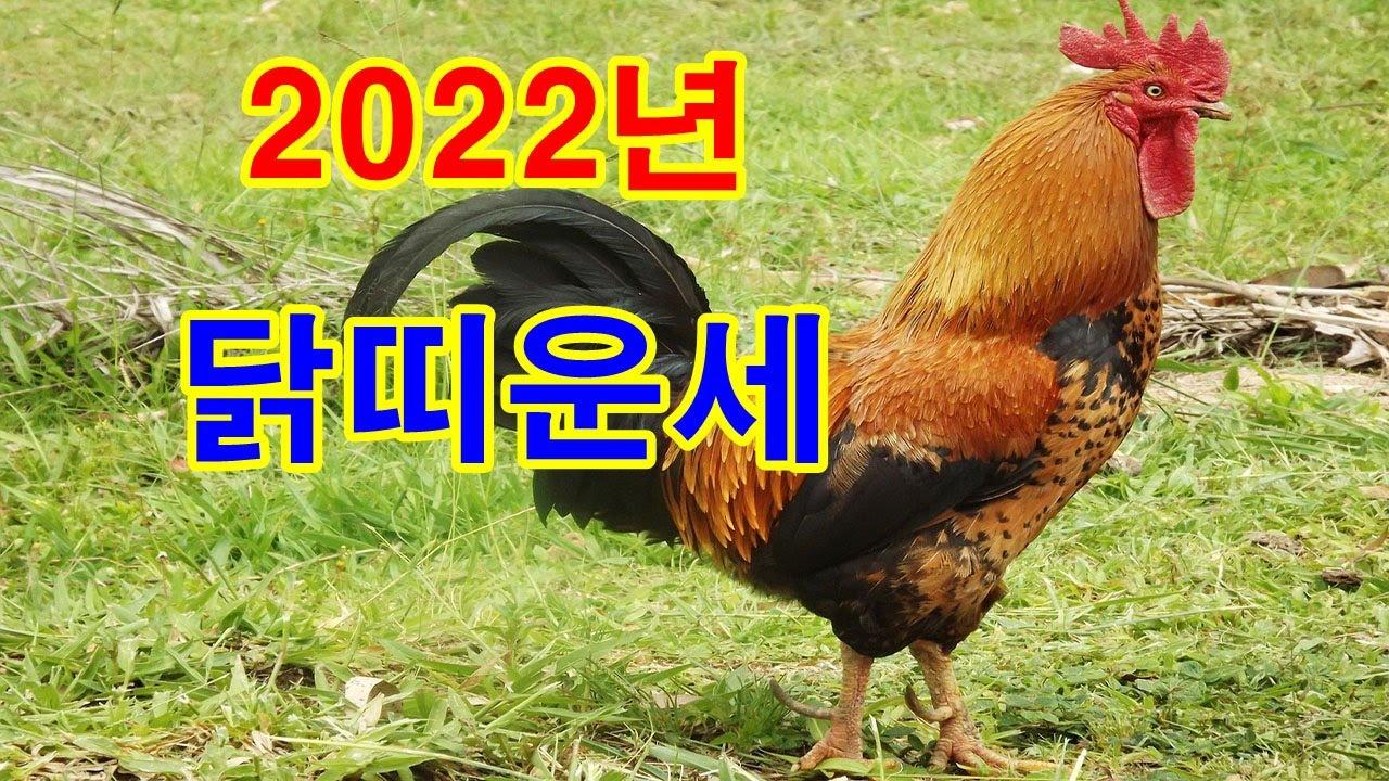 닭띠 2022년 운세를 보세요