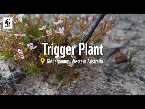 Trigger Plant: Search and Rescue | WWF-Australia