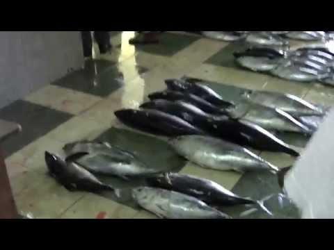 Malé FISH market - beautiful MALDIVES