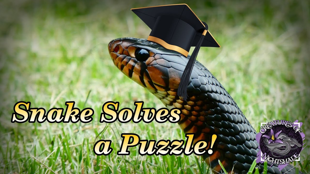 Snakes Solving Puzzles?! Snakes are Smart! | Nina Ottosson Puzzles | Creatures of Nightshade