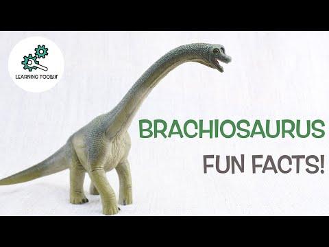 BRACHIOSAURUS FACTS! | Fun & Educational | Dinosaurs For Kids | Best Dinosaur Facts