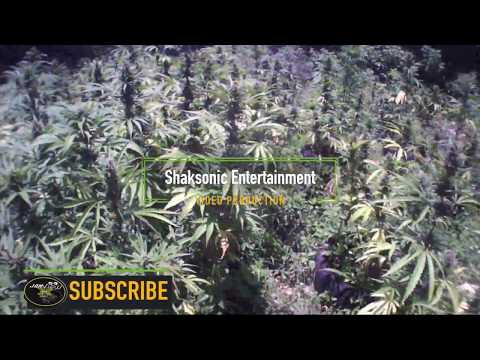 Jamaica Best Growers Episode 1 (SHORT DOCUMENTARY)