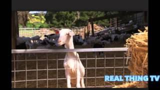 Australia's largest ever farm based outbreak of Q fever