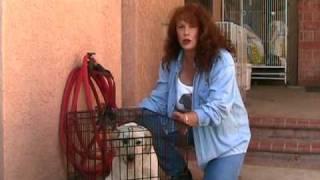 Www.susanalabradors.com Training Your Labrador Puppy: Crate And Bite Training