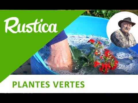 baigner les plantes dans l eau ti de youtube. Black Bedroom Furniture Sets. Home Design Ideas