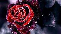 Kotkan ruusu - Eino Grön