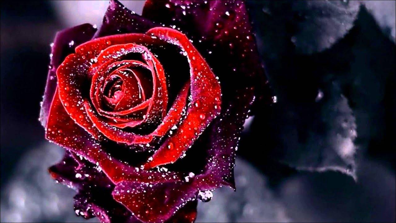 Kotkan Ruusu
