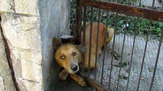 AnimaAid~インド・ウダイプールの街中では、毎日こんな動物救出作戦が繰り広げられているらしい