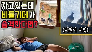 [몰카]자고있는데 방안으로 비둘기가 습격한다면?ㅋㅋㅋㅋㅋ