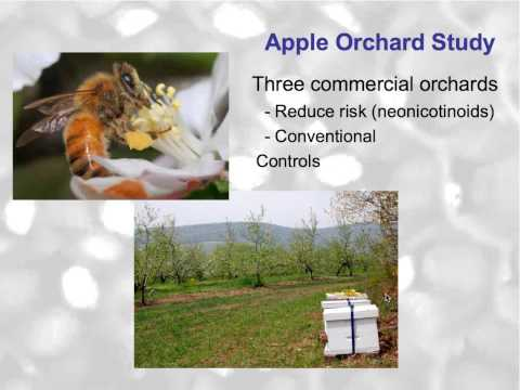 Pesticides In Our Beehives with Maryann Frazier