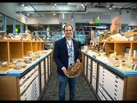 Science Cafe: Collected Curiosities