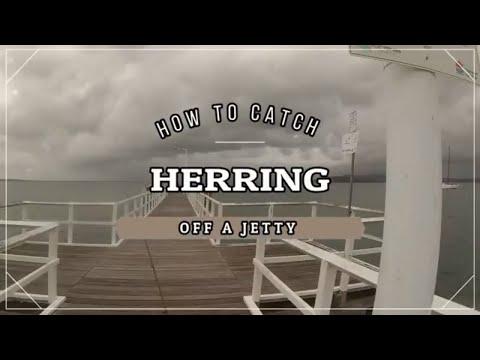 HERRING FISHING - How To Catch Herring For Bait ( Part 2 )