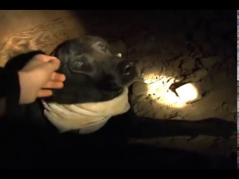 The Jarvis Mine: Dog Died In Mine