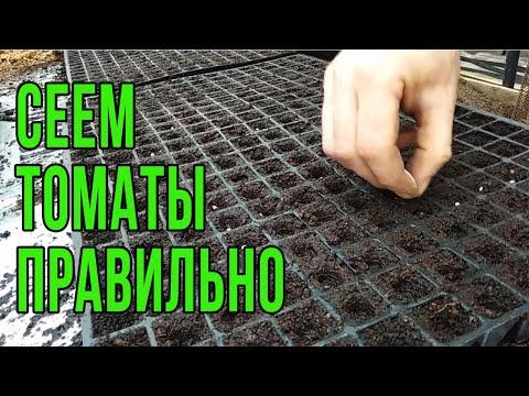 Посев помидоров 2020 на рассаду в теплице Как посеять томаты