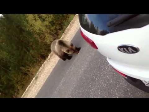Гопник встретил медведя