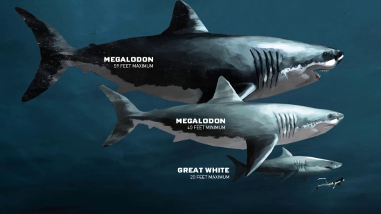 Großartig Megalodon Hai Malvorlagen Ideen - Druckbare Malvorlagen ...